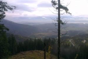 Vlhké a chladné počasie lesom vrátilo sýtozelenú farbu