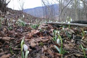 Nezadržateľný príchod jari