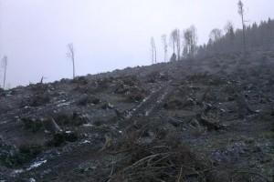Uprednostnili sme plochy s extrémnejšími podmienkami pre rast stromčekov