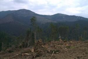 Pohľad na protiľahlú stranu Suchej doliny – Omáleník (PSU L. Trnovec)