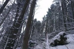 Roztrúsená kalamita – dolina Sestrč
