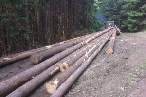 Nasledovalo sústredenie drevnej hmoty pomocou LKT