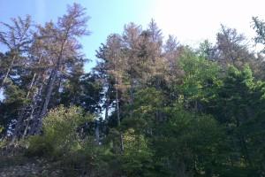 Vetrová kalamita na hrebeni Holice