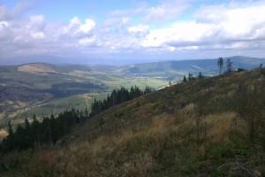 Porast zničený vetrom priamo na hrebeni