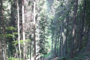 Sprístupnenie Holice od Vodojemu kvôli vetrovej kalamite ležiacej na hrebeni