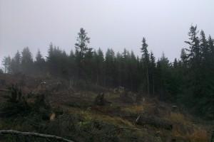 Prebiehajúce ťažbové práce na hrebeni Holice