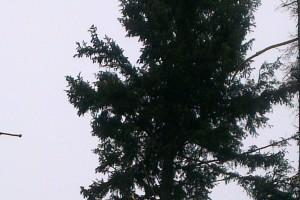 Niektoré stromy majú ešte zelenú korunu, ale na kmeni opadanú kôru