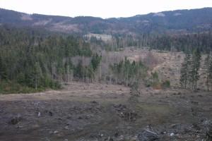 Zalesňovanie Meštrovej