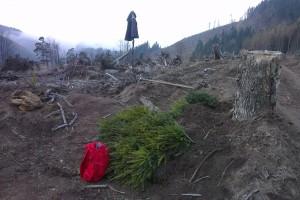 Sadenice pripravené na zalesňovanie na Holých Žiaroch