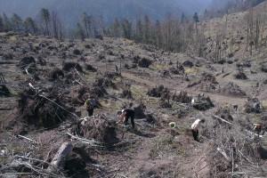 Zalesňovanie na Holých Žiaroch