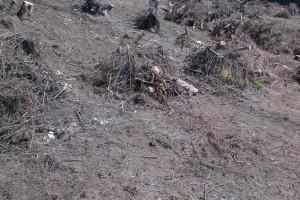 Haluzina na Holici je uhodená vďaka PZ Prosečné