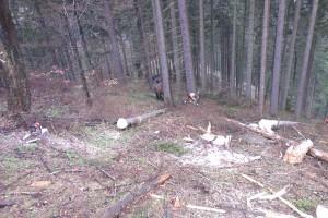 Ťažba suchárov pod hradom v Sestrči