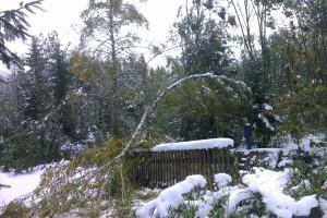 Breza vedľa chaty neuniesla váhu snehu a nápor vetra