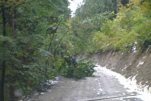 Ťažký sneh v kombinácii s vetrom spôsobil škody hlavne na listnatých stromoch