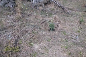 Jarné opakované zalesňovanie